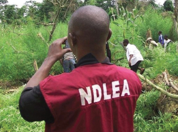 NDLEA uncovers illegal drug factory in Lagos