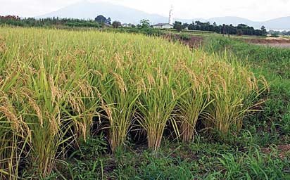 Spanish Company Identifies locations for rice project in Kwara