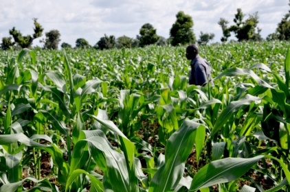 70% Of Nigeria's Farm Produce Rots In Transit