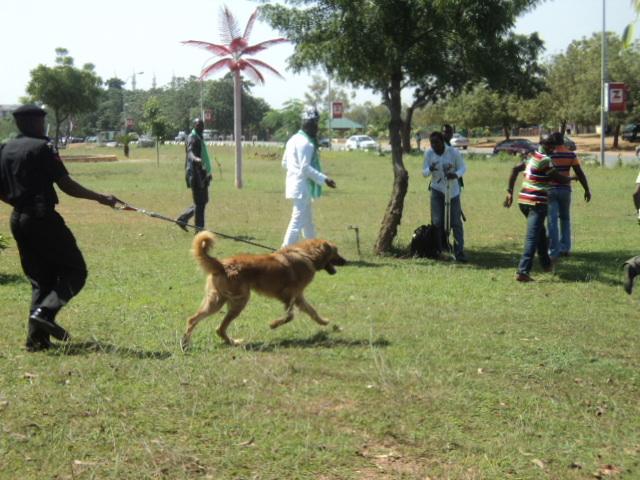 Dogs to hunt for Boko Haram members