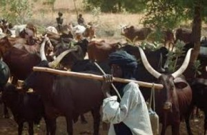 Warring Ethnic Groups In Taraba Sign Peace Pact