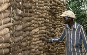 Yam Produce: Benue Farmers\Traders Seek Improved Value