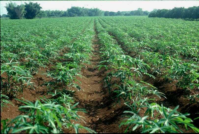 FG secures $74 million loan to boost agriculture