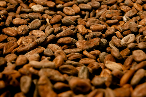 FG distributes cocoa seedlings to farmers in Ondo