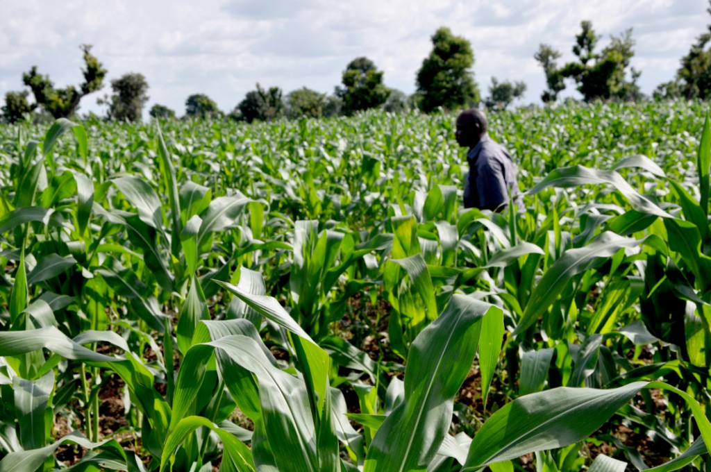 Analysts Say FG's Intervention In Agriculture Long Overdue