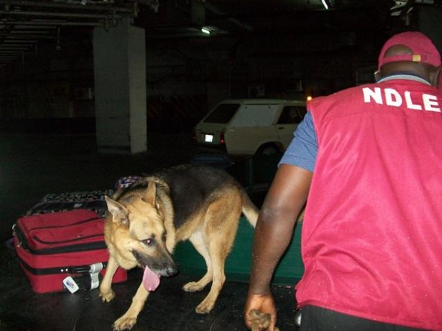 NDLEA, Army Raid Kaduna, Arrest Suspected Drug Barons, Addicts