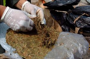 NDLEA Arrests Graduate With Indian Hemp Weighing 89.3 Kg