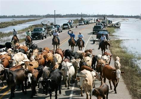 Delta Commissions Taskforce To Monitor Fulani Herdsmen