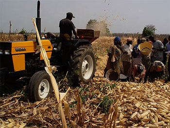 Ogun State Govt. Boosts Rice Production