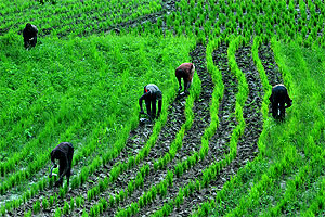 ARMTI Grants N4 Million Loan To Kwara Farming Communities