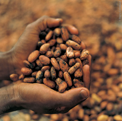 Abia Distributes Free Cocoa Seedling To Registered Farmers