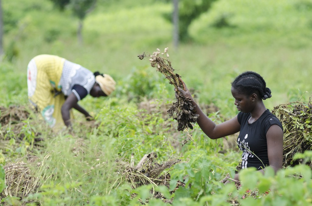 thesis problems facing agriculture in nigeria economy