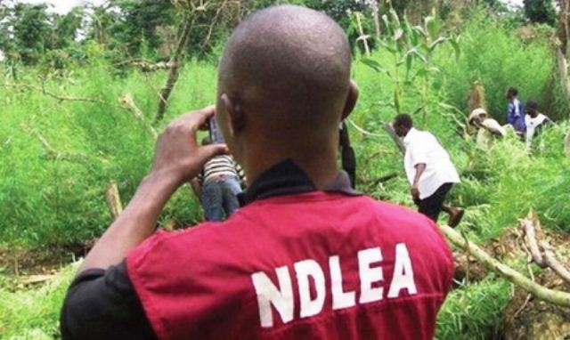 NDLEA To Intensify Efforts Against Illicit Drug Trade