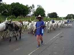 Nigeria To Establish Grazing Reserves To End Clashes