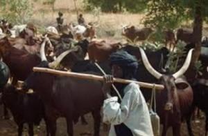 fulani-herdsmen-300x1971