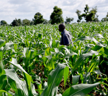 Agricultural Reform: Delta State Resuscitates Research and Training Centre