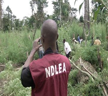 EU, UNODC, NDLEA Seek Regional Cooperation Against Narcotics