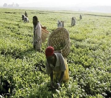 Kogi Partners BoA To Provide N750m Loan To Farmers