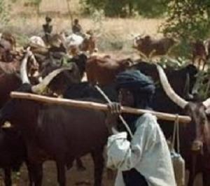 herdsmen, herdsmen attacks, Benue State, Grazing
