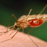 Malaria Drugs