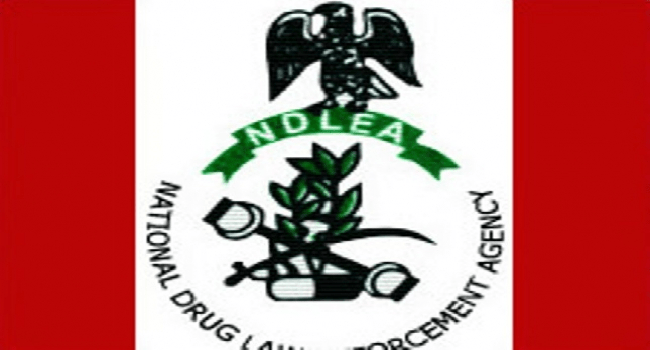 NDLEA Arrests Suspect With 780 Bags Of Marijuana