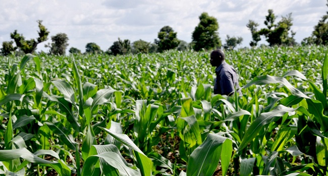 using nigeria agricultural cooperative and rural Suggestions were proffered on how to improve on the activities of cooperative organization in nigeria which rural economy cooperative agricultural rural.
