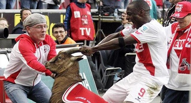 Cologne's Ujah Apologises To Goat For Rough Treatment