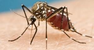 Zika, w.h.o