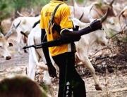 Police, fulani herdsmen, cattle grazing