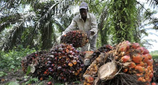 Liberians 'Pressured To Sell Land' For Palm Oil Plantations