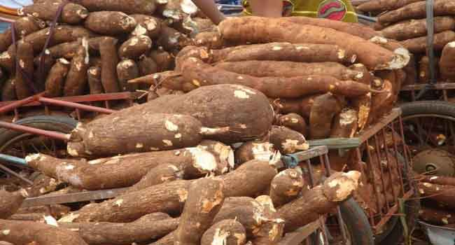 Ogun Govt. Seeks Partnership In Mechanised Cassava Production