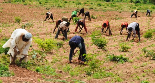 FG Dismisses Report Of Famine In Northeast