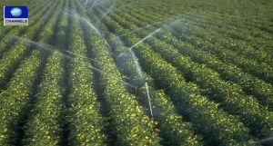 irrigation-farming