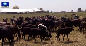 House of Representatives on Cattle rustling
