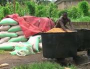 Benue Reduces Rice Production Deficit By 1.5 Million Metric Tons