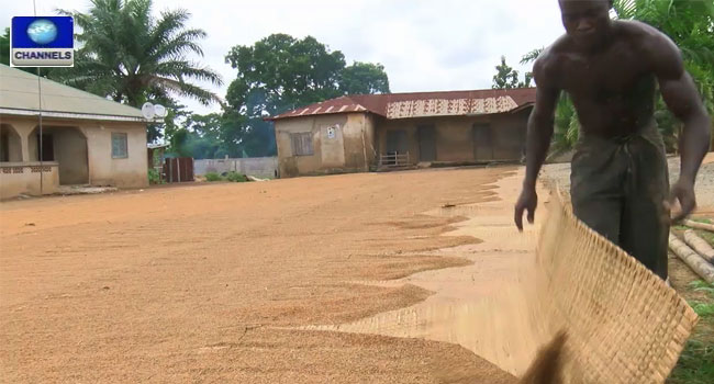 FG Sets Up National Task Force On Rice, Wheat Production