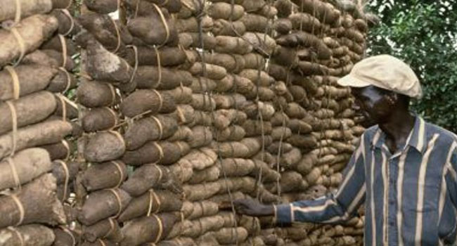 Yam Produce: Benue Farmers, Traders Seek Improved Value