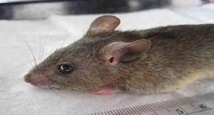 Lassa Fever Kills Four In Nasarawa State