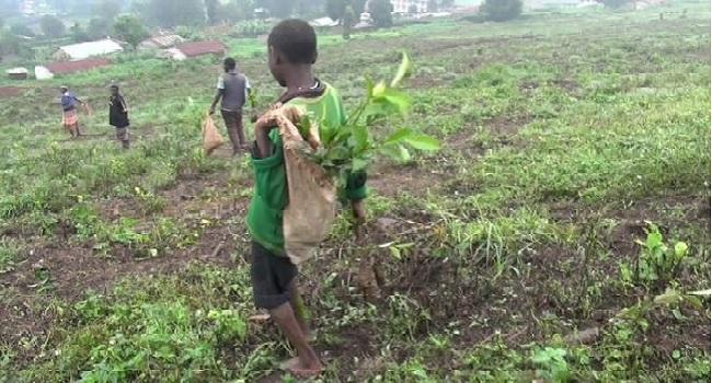 Kwara Immigration Rescues 20 Minors