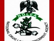 NDLEA Parades 14 Drug Suspects In Kogi