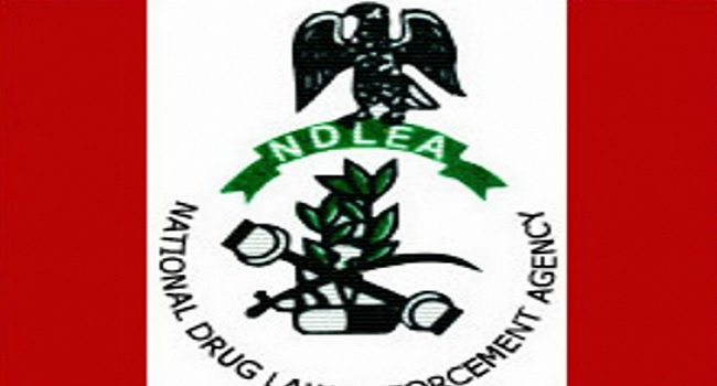 Drug Abuse: NDLEA Arrests 186 Suspects In Jigawa