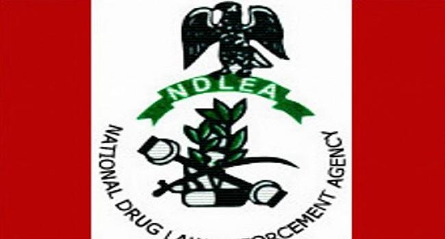 Adamawa NDLEA Seals Off Cannabis Ware House