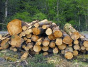 Oyo Govt Warns Residents Against Illegal Tree Felling