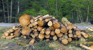 Felling of Trees, Desertification,