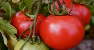 Tomato-scarcity-in-Nigeria