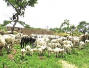 Benue Govt. Denies Inducement On Anti-Grazing Bill