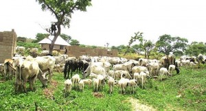 Lawmakers, Grazing Bill