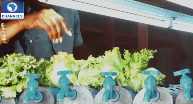 Urban Agriculture : Inspiring And Innovative Hydroponic Farming System