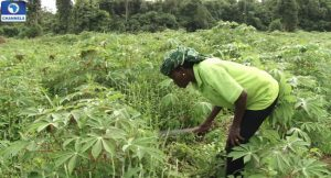 Economic Recession: Bank of Agriculture Disburses N21.5billion to 107,200