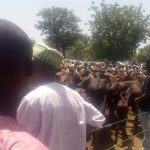 Borno_Cattle_Market